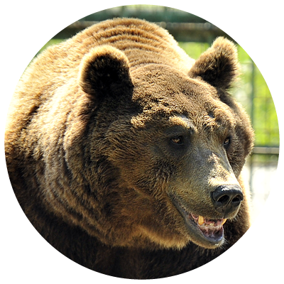 ursul[1]